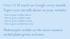 hot wo grow orchids at home