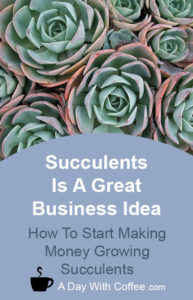 Succulents Is A Great Business Idea - Succulent plants